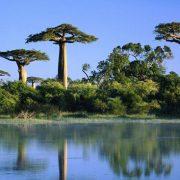 arbre-baobab-bio-fruit-baomix-biologiquement-1