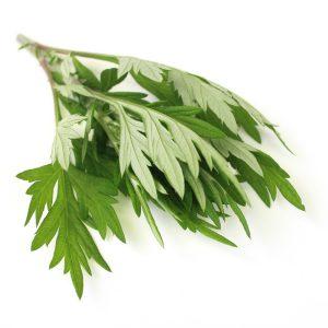 Artemisia annua Armoise