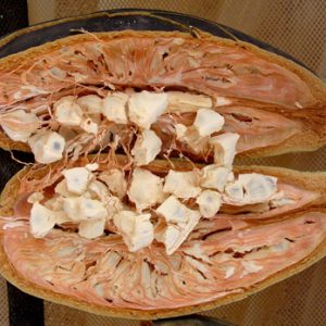Le fruit de baobab bio Baomix produit par Biologiquement