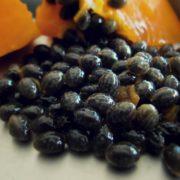 Graines de fruit de papaye riche en antioxydants et anticancer