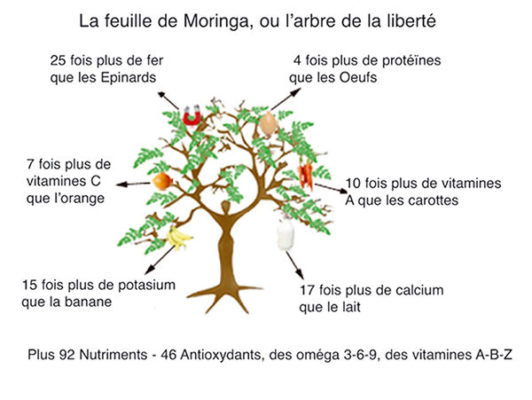 Les apports nutritifs de la feuille de moringa bio