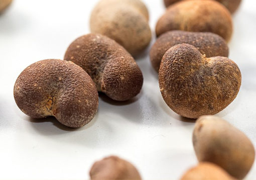 Graines de baobab bio utilisées pour l'huile vierge de baobab bio Biologiquement