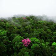 plante-ecorce-lapacho-pau-arco-bio-anti-cancer-biologiquement-david-hervy (4)