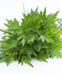 Artemisia Armoise