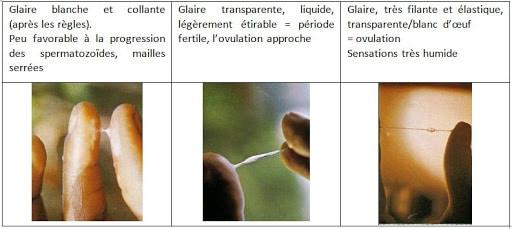La méthode Billings contraception naturelle